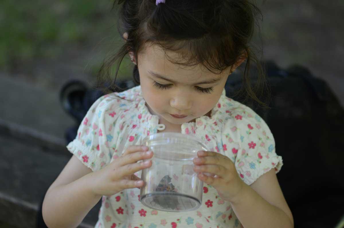 Isabella, snart 3 år, studerer sin første Østlig Takvinge (Nymphalis xanthomelas)